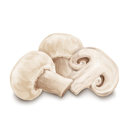 Vegetable organic food realistic champignon mushrooms isolated on white background vector illustration Ilustracja