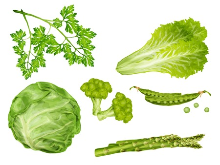 Green vegetable organic food set with cabbage parsley peas lettuce isolated vector illustration Vector