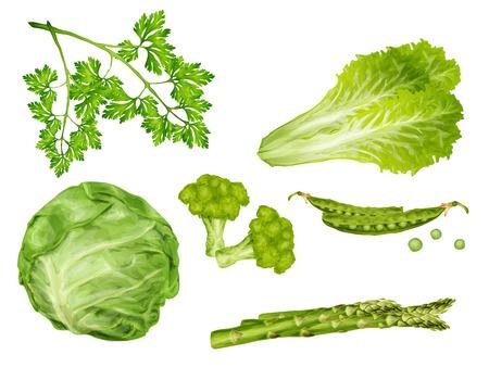 Groene groente biologisch voedsel set met kool peterselie erwtjes sla geïsoleerde vector illustratie Vector Illustratie