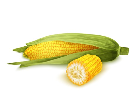 maize: Vegetable organic food realistic yellow corn stalk isolated on white background vector illustration Illustration