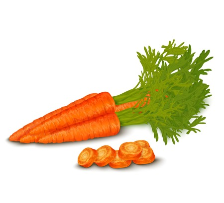 carrot: Vegetable organic food realistic fresh carrot isolated on white background vector illustration.