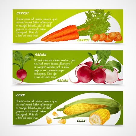 maize: Vegetable organic food realistic carrot radish and corn horizontal banners set isolated vector illustration Illustration