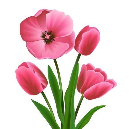 ピンク開花チューリップ花の花束現実的ベクトル イラスト  イラスト・ベクター素材