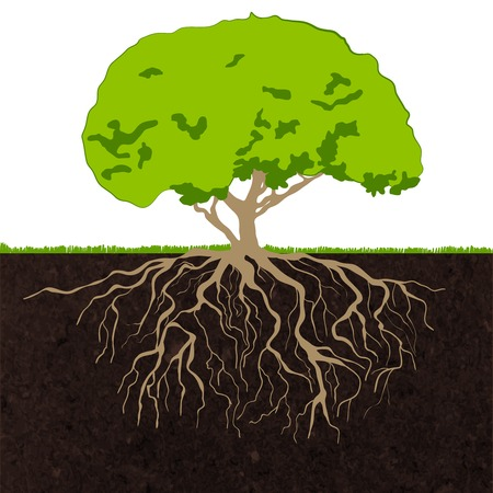 raices de plantas: Caducifolio decorativo estableci� �rboles forestales corona verde y la ilustraci�n ra�ces concepto de la ecolog�a impresi�n del cartel del dibujo abstracto de vectores