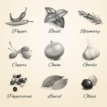 alcaparras: Aislado Hierbas y especias elementos decorativos juego de cocina en blanco y negro ilustración vectorial. Vectores