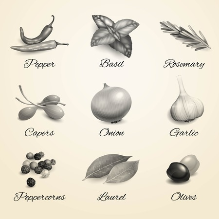 basil leaf: Herbs and spices decorative elements black and white kitchen set isolated vector illustration.