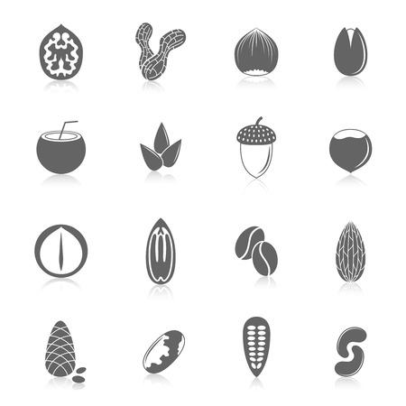 pinoli: Set di mandorla nocciola noce di cocco semi di girasole e noci in stile nero con riflessione illustrazione vettoriale