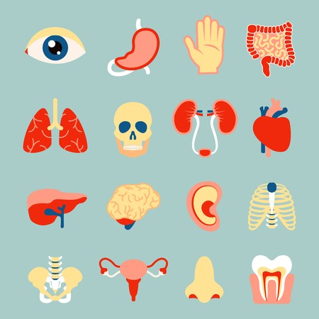 Human organs set of eye tooth lungs brain isolated vector illustration Illustration