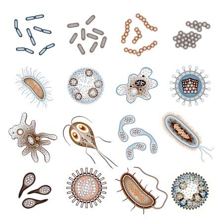 박테리아 바이러스 및 세균 전염병 세균 세포 아이콘 절연 벡터 일러스트 레이 션