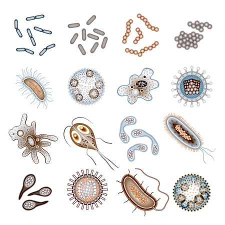 bacillus: Bacteria virus and germs epidemic bacillus cells icons isolated vector illustration