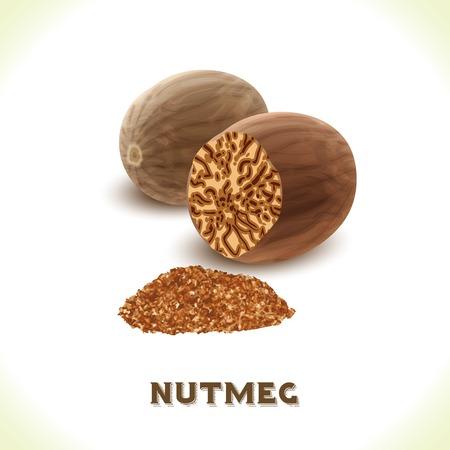 nutmeg: Brown nutmeg nut isolated on white background vector illustration Illustration
