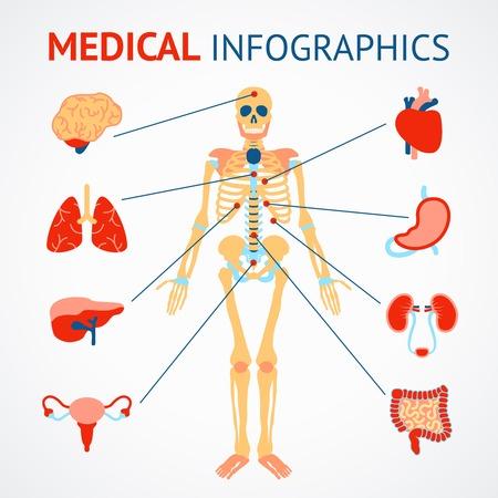 human cardiovascular system: Medical infographic set of human skeleton and internal organs vector illustration