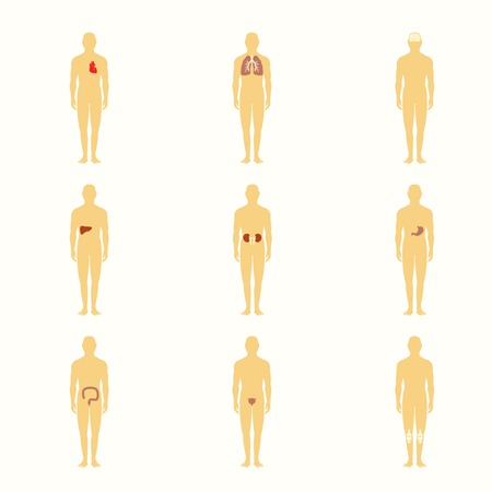 bladder surgery: Human male silhouette figures with internal organs icons set isolated vector illustration