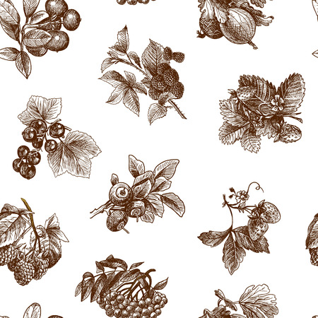 Natural organic berries set of strawberry blackberry cranberry sketch seamless pattern vector illustration Vector