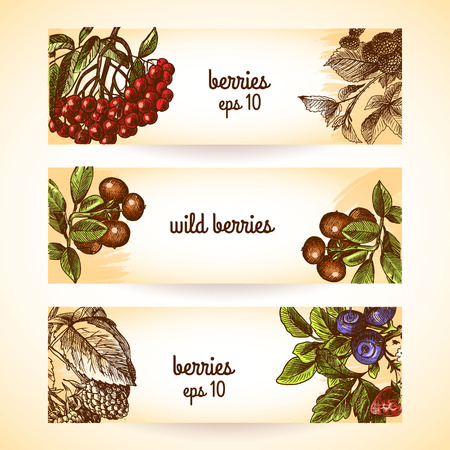 cranberry illustration: Natural organic berries set of blueberry cranberry blackberry sketch horizontal banners isolated vector illustration