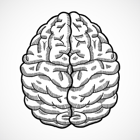 frontal view: Human brain cortex top view sketch isolated on white background vector illustration