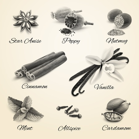 nutmeg: Confectionery spices decorative elements black and white isolated vector illustration