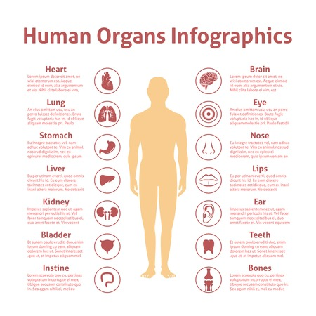 Human organs icons with male figure infographics set vector illustration