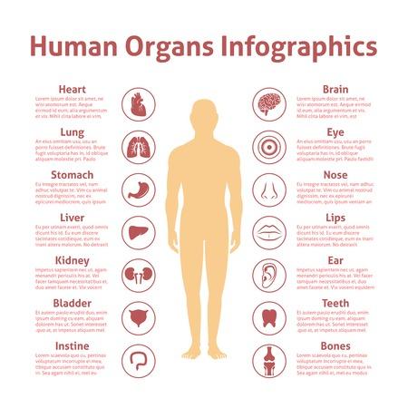 organi interni: Organi icone umane con infografica figura maschile set illustrazione vettoriale