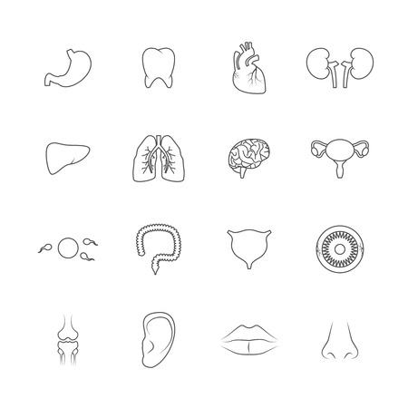 Human organs outline icons set of liver lips ear isolated vector illustration Vector