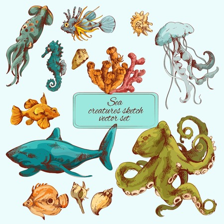 Sea fishes and ocean creatures sketch colored decorative icons set isolated vector illustration Vector