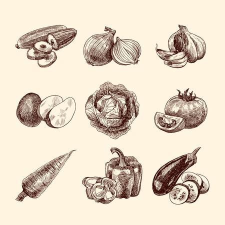 onion slice: Vegetable natural organic food sketch set isolated illustration