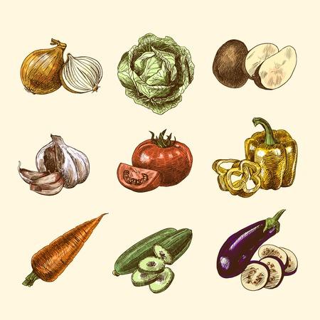 tomato  salad: Bosquejo color de los alimentos frescos org�nicos naturales Vegetales establecido aislado Ilustraci�n Vectores