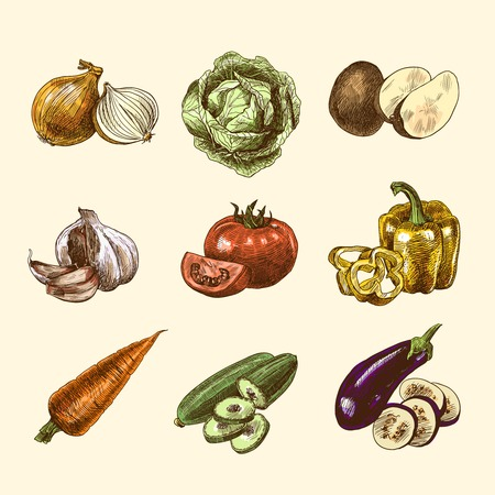 onion isolated: Vegetable natural organic fresh food color sketch set isolated illustration