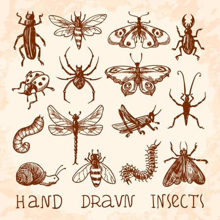 Insects sketch decorative icons set with dragonfly fly butterfly isolated illustration Vector