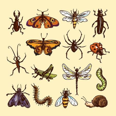 Insects sketch colored decorative icons set with ladybug caterpillar wasp isolated vector illustration Vector