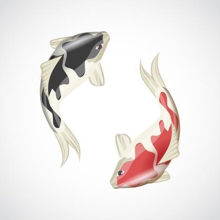 pez carpa: Peces koi japonés chino carpa roja animal del agua aislada en el fondo blanco ilustración vectorial