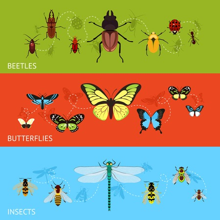 Insects colored decorative banner flat set with beetles and butterflies isolated vector illustration Vector