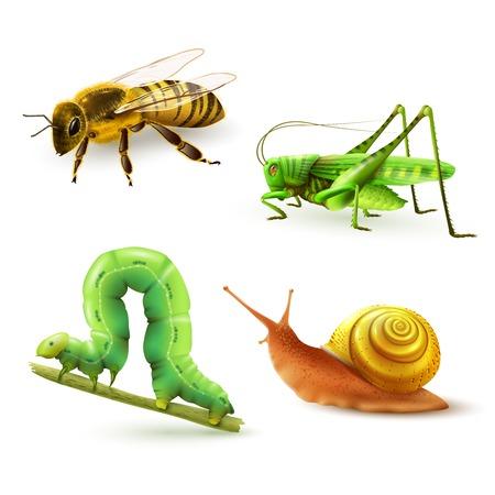 CARACOL: Insectos realistas iconos decorativos de colores establecen con aislados caracol oruga saltamontes avispa ilustraci�n vectorial