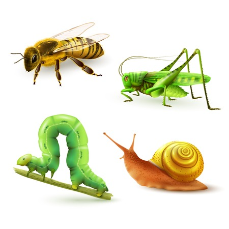 Insects realistic colored decorative icons set with wasp grasshopper caterpillar snail isolated vector illustration Illustration