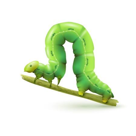 oruga: Oruga verde insectos realista en el palillo de la planta en el fondo blanco ilustración vectorial