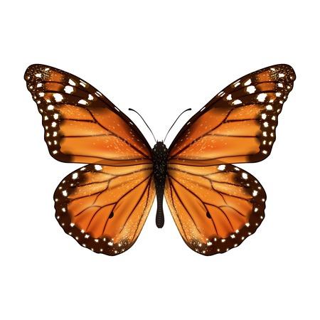 papillon: Insectes r�alistes papillon de couleur isol� sur fond blanc illustration vectorielle