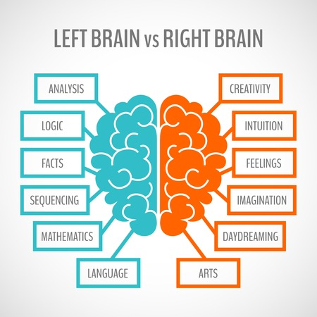 Cervello sinistro analitiche e creative emisferi destro infografica set illustrazione vettoriale