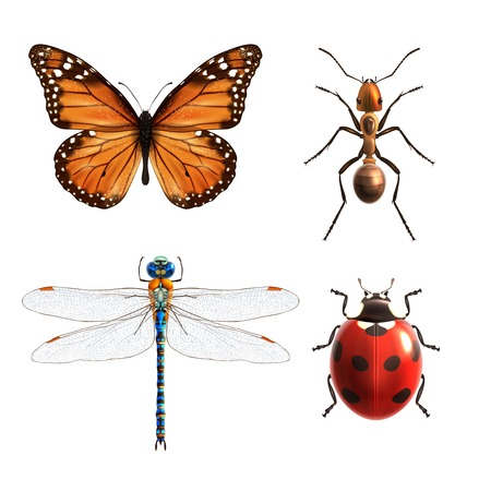 Insetti realistiche icone colorate decorative impostate con coccinella libellula farfalla formica illustrazione vettoriale isolato