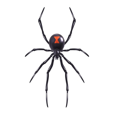 latrodectus: Insect realistic poisonous spider isolated on white background vector illustration Illustration