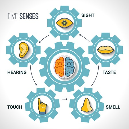 senses: Five senses concept with human organs icons and brain in cogwheels vector illustration.