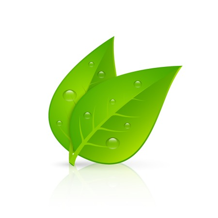 dew: Two green leaves with fresh dew drops realistic image icon for pharmaceutical eco products emblem vector illustration