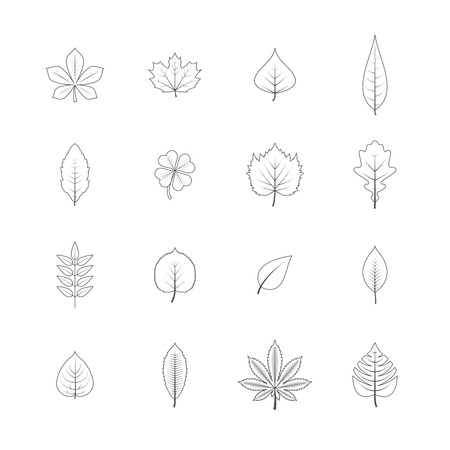 aspen: Forest trees eco elements line graphic icons set with maple oak aspen leaves black isolated vector illustration
