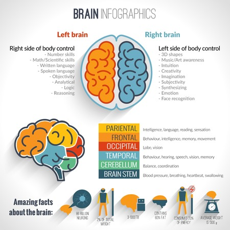 Brain structure left analytical and right creative hemispheres infographics set vector illustration Иллюстрация