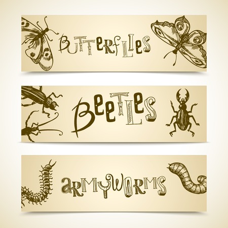 beetles: Insects sketch horizontal banner set with butterflies beetles armyworms isolated vector illustration Illustration