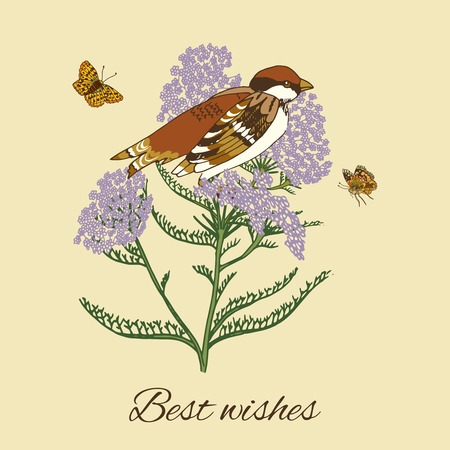 yarrow: Vintage flowers postcard design with yarrow butterflies and sparrow bird vector illustration Illustration