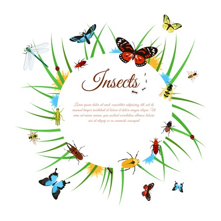 Insects background with butterflies dragonflies and bees in grass vector illustration Illustration