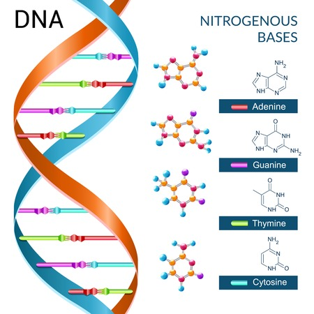 dna strand: Dna bases chemistry biochemistry and biotechnology science symbol poster vector illustration