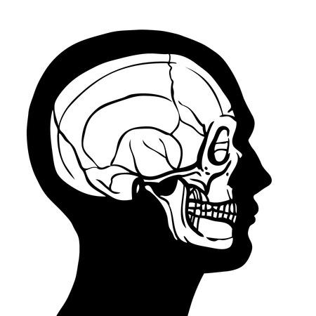 Human head profile contour with skull inside anatomy concept vector illustration