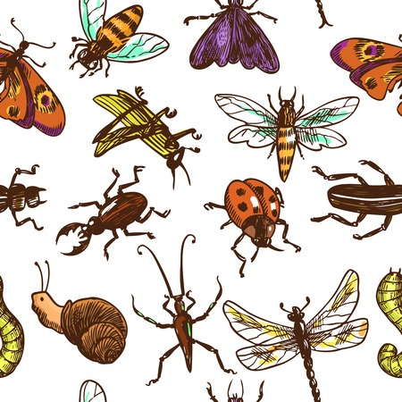 Insects sketch colored decorative seamless pattern with bug butterfly dragonfly vector illustration Vector