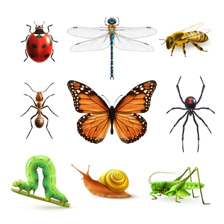dragonfly wings: Insects realistic colored decorative icons set with ladybug snail wasp isolated vector illustration